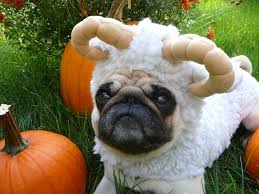Pug Halloween Costume 166 Pugs Costumes Images Animals Funny