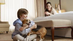 pet friendly hotels akron ohio sheraton suites akron cuyahoga falls