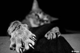 griffe canapé pourquoi le se fait les griffes absolument chats