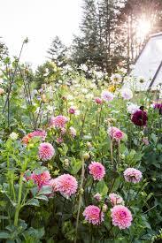 best 25 cut flower garden ideas on pinterest spring plants