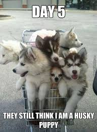 Cute Puppy Meme - cute funny puppy meme funny best of the funny meme