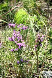 kansas native plant society gardening with greggo annual wildflower weekend day one