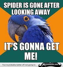 Paranoid Parrot Memes - paranoid parrot meme parrot humor pinterest