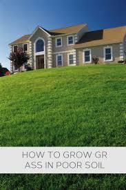the 25 best how to grow grass ideas on pinterest