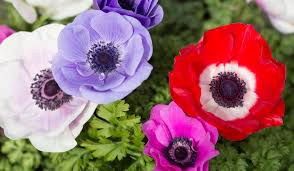 Names And Images Of Flowers - 10 spring flower names beyond the classic lily and rose huffpost