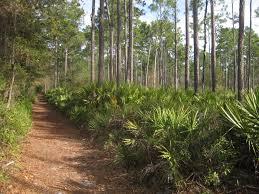 plant communities environmental nature center alachua county u0027s best birding sites