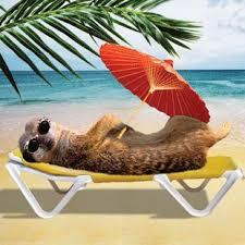 funny meerkat holiday meerkat stokstaartje pinterest