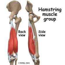 Back Knee Anatomy Hamstring Pain U0026 Injury Houston Methodist