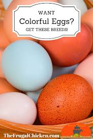 best 25 colored eggs ideas on pinterest easter eggs 2016 how