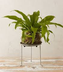 the best indoor plants to clear the air mydomaine