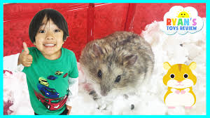 Petsmart Small Animal Cages Ryan Toysreview First Pet Buying Hamster From Petsmart Family Fun