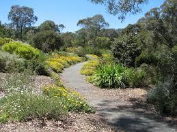 south australian native plants plants archives page 5 of 8 trevor u0027s travels trevor u0027s travels