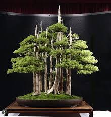 care guide for the juniper bonsai tree juniperus bonsai empire