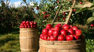 starting an orchard what is required maintenance tips youtube