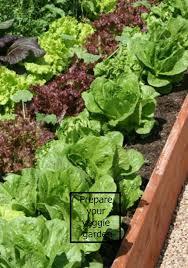 Winter Garden Jobs - 5 must do gardening jobs for winter diy decorator