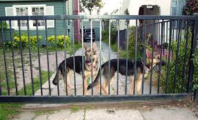 Can You Bury Animals In Your Backyard Fencing The Yard Whole Dog Journal