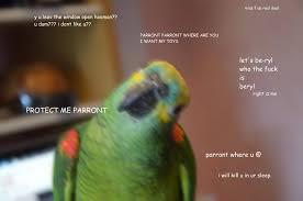Parrot Meme - mrs f will always be the og parront