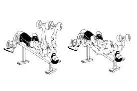 Flat Bench Db Fly Lazar Angelov U0027s Fitness Academy