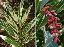 plants flowers ornamental