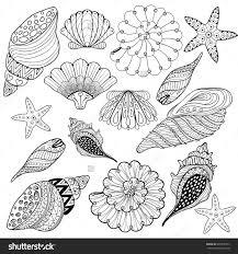 seashell coloring page sea shells coloring pages seashells