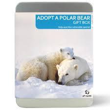 adopt a polar bear gift