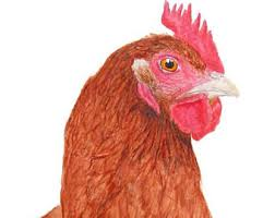 chicken wall art etsy