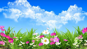 google images flower flower spring live wallpaper android apps on google play