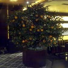 big artificial trees manufacturer from delhi