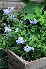 Summer Garden Ideas - my top ten gardening ideas for the year house of hawthornes