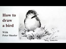 watercolor tutorial chickadee 1000 images about drawing on pinterest birds drawings and