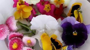 les fleurs comestibles en cuisine et si on mangeait des fleurs