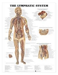 Anatomy Pancreas Human Body Biliary Tract Anatomy Gallery Learn Human Anatomy Image