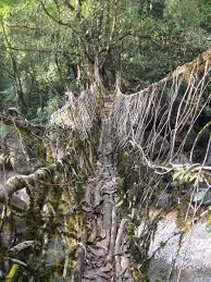 32 best nature trees tree roots and living bridges made from