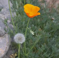 native plants for wildlife habitat and conservation landscaping garden art