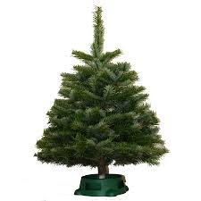 shop 2 5 ft fresh noble fir christmas tree at lowes com