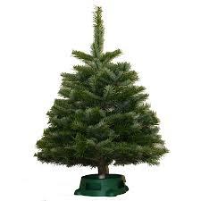 shop fresh christmas trees at lowes com