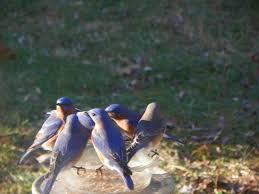 Nj Backyard Birds by 2017 Backyard Birds Hackettstown Nj
