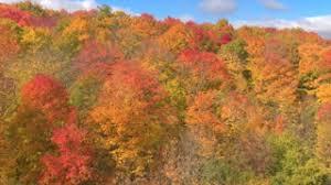 row of oak trees in autumn colors crane foliage stock