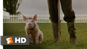 that u0027ll do pig 9 9 movie clip 1995 hd youtube