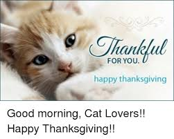 Thanksgiving Cat Meme - tahu for you happy thanksgiving good morning cat lovers happy
