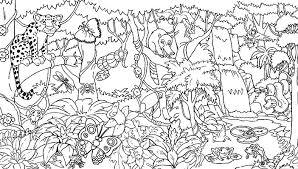 rainforest biome coloring pages murderthestout