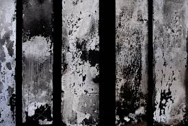 free images tree snow winter black and white wood texture
