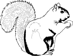 squirrel coloring page chuckbutt com