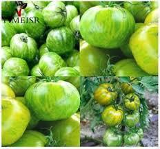 edible fruits tomato edible fruits vegetable flower skin tomato plant