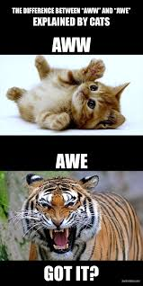 Awe Meme - aww vs awe hackerhaus