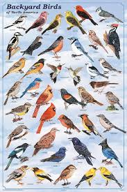 Birds In Your Backyard 88 Best It U0027s For The Birds Images On Pinterest For The Birds