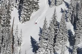Christmas Tree Permits Colorado Buffalo Creek by Take Your Ski Country Experience Beyond The Blues Colorado Ski