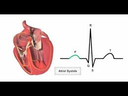 Anatomy Of The Heart Lab Anatomy U0026 Physiology Online Cardiac Conduction System And Its