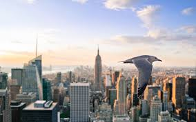 desktop wallpaper hd new york new york city seagull desktop wallpapers hd high definition windows
