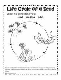 parts of a plant worksheetsworksheets